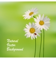 Natureal summer background vector image