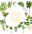 house plants flowerpot isolated objects vector image vector image