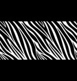 zebra skin pattern animal print black and white vector image vector image