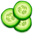Fresh cucumber slice isolated on white background vector image vector image