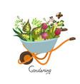 garden wheelbarrow with flowers isolate vector image