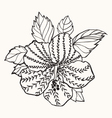 Hawaii hibiscus flower leaf for Coloring book vector image vector image