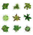 realistic detailed 3d top view green plants set vector image