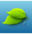 green leaves and dew drops vector image