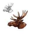 moose elk muzzle profile isolated sketch vector image