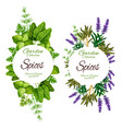 organic herbs and spices green seasonings vector image vector image