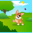 funny little corgi walking by green meadow in park vector image