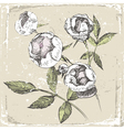 hand drawn roses in old-fashioned style vector image