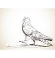 pigeon bird vector image vector image