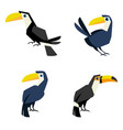 toucan flat style isolated on white vector image