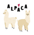 two cute alpacas with lettering isolated vector image