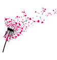 valentine s background with love dandelion vector image