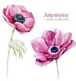 Anemones vector image vector image