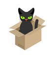 cat in box isolated pet in cardboard box vector image