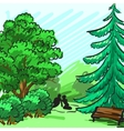 Spruce and green tree in the background Park an vector image vector image