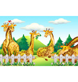 Giraffes in the safari vector image vector image