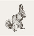 hand drawn squirrel retro realistic animal vector image