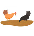 hens eating food from ground chicken with wheat vector image vector image