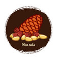 pine cone with nuts hand sketched pine nuts vector image