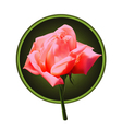 Picture of pink rose vector image