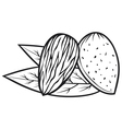 almond with leaves - almond nut vector image vector image