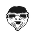 badger head cool sunglasses design vector image