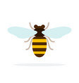 bee front view flat isolated vector image vector image