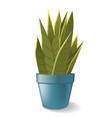 sansevieria in pot home plant vector image vector image