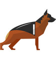 shepherd german dog icon isolated on white vector image vector image