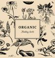 hand drawn herbs organic healing plants vector image vector image