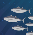 Group of tuna fish swimming vector image vector image