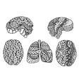 Human Brain and lungs vector image
