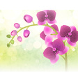 Purple Orchid Flower on a Blurred Background vector image vector image