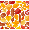 seamless pattern with autumn tree leaves vector image