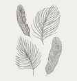 tropical exotic leaves set isolated on vector image