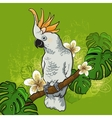 Cockatoo parrot on a branch with flowers vector image