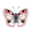 gray butterfly peacock eye vector image