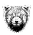 red panda graphic sketch hand-drawn portrait vector image