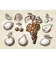 Set fruits sketch Hand-drawn elements such as vector image vector image