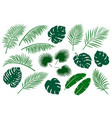 set of green palm leaves vector image vector image