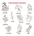 anxiety treatment herbs collection vector image vector image