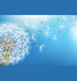 dandelion blowing seed on blue background vector image vector image