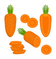 set with carrot on white background vector image