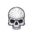 human skull on white hand drawn vector image