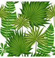 leaves palm trees vector image vector image