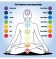 seven chakras human body vector image
