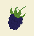 Blackberry Berry Icon vector image vector image