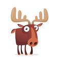 cool carton moose vector image vector image