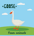 cute goose farm animal character farm animals vector image
