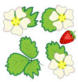 red berry strawberry and a half strawberry set vector image